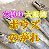 タチウオ、青物狙いの時合までに穴釣りでボウズのがれ!大阪南部 ほぼ釣れますよ!!