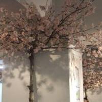 池袋西武☆『さくらまつり』で春欄満