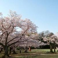 岡山市長選挙イヤー 2021 #DontBeSilent #わきまえない岡山市民 。ロビンフッド効果による投票率の急騰で県都は健全化、成長都市へ!