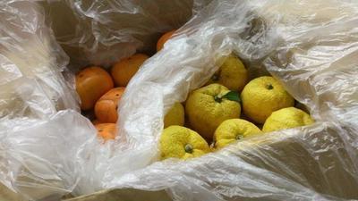 実家の庭でとれた柚子と柿