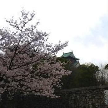 大阪城2013桜