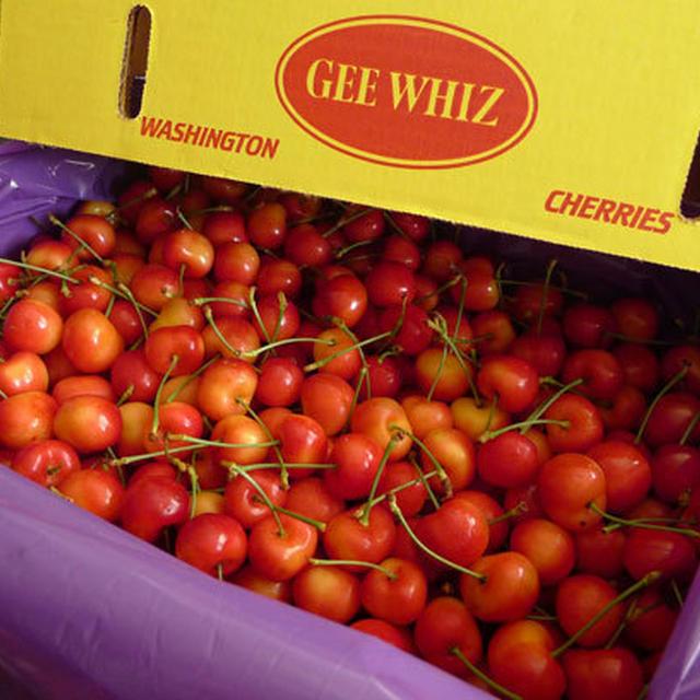 【料理】トマト肉じゃがと大粒の絶品チェリーの季節がやって来た!
