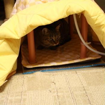 猫用こたつがやってきた!