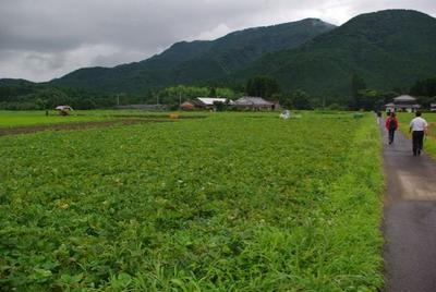 宮崎の農家の♡赤ダイヤと呼ばれる『かんしょ』(さつま芋)で!塩バター香る炊き込みごはん