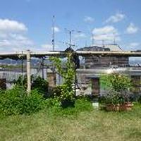 京都みつばちガーデン推進プロジェクトとは?