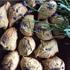 ハーブ&スパイスを大量消費!秋に楽しみたい「#大人のクッキー」