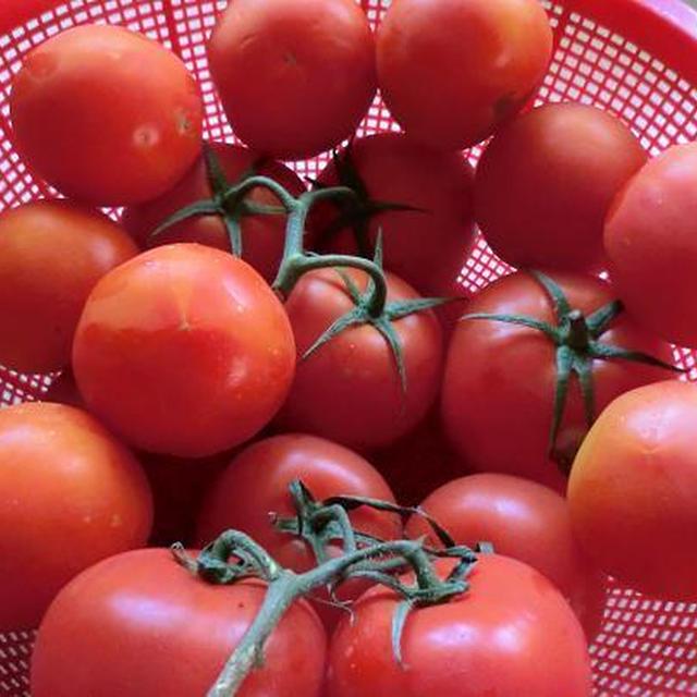 生活習慣病(成人病)の予防に効果的なトマト! できれば毎日食べたい野菜