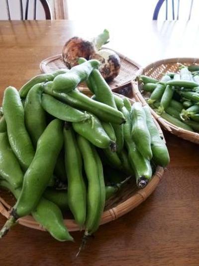 グリンピースと空豆と