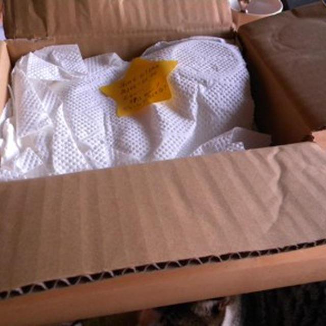沖縄からの贈り物「ミニマンゴー」とマンゴーの冷凍保存