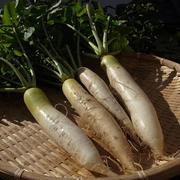 干し野菜☆大根編