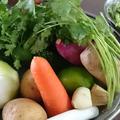 今日のお野菜