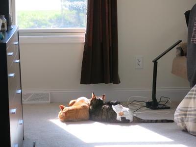 次男猫との永遠の別れ