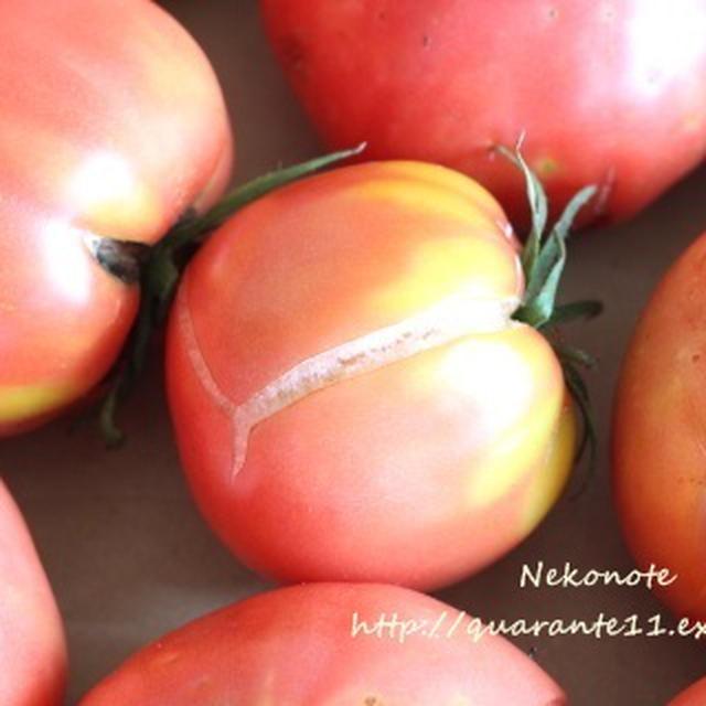皮むき不要! 冷凍トマトでトマトスープ