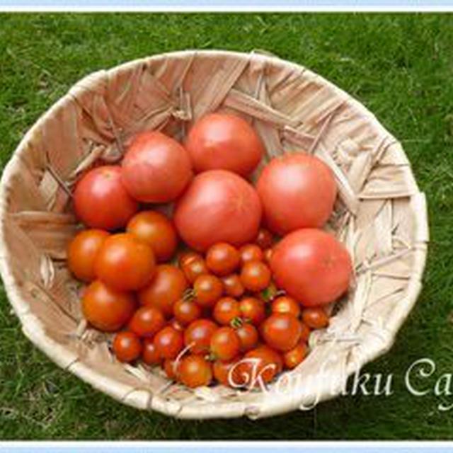 採れ過ぎたトマトの保存法