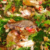 ドライフラワーや、赤い葉っぱ。