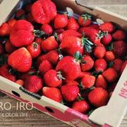 たくさんのイチゴ!