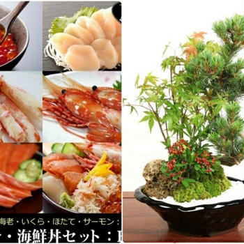 ■アメリカ在住の二女からBigブレゼントが@@!【北海道グルメセット&盆栽の寄せ植え】が届きました(^^)/