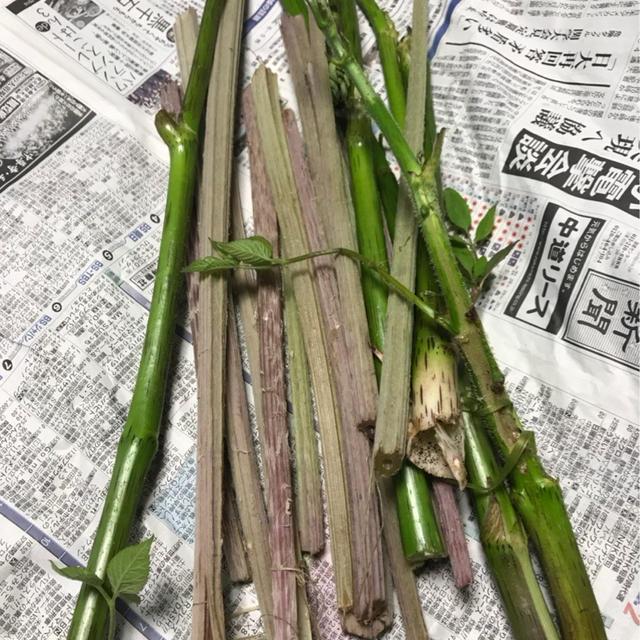 今年も山菜採りができた!