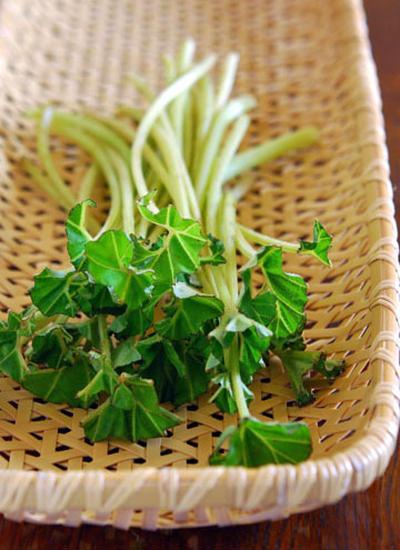 春野菜 野ふき