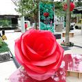 【バラを五感で体感♡ROSE WEEK 2018♡東京ガーデンテラス紀尾井町】