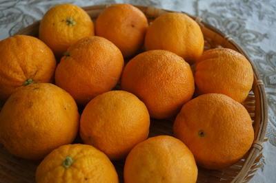 自家製ブラッドオレンジでアランチェッロ Arancello