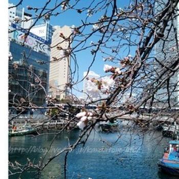 横浜の桜とタイ料理