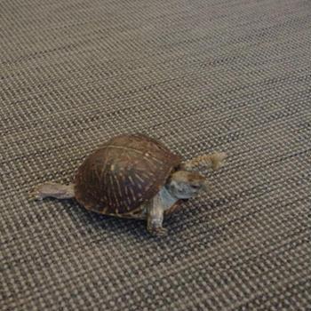 図書館に亀が来た